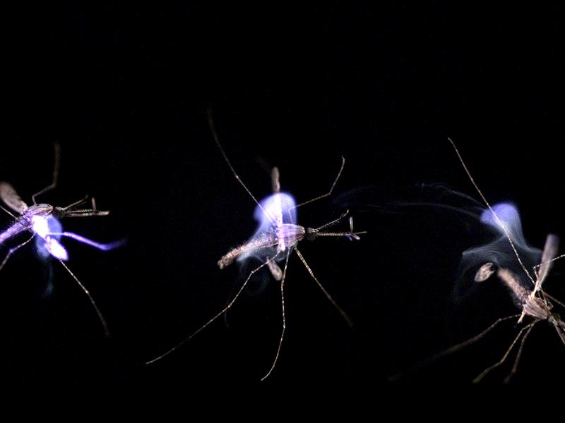 A sequence showing a mosquito being zapped by the photonic fence