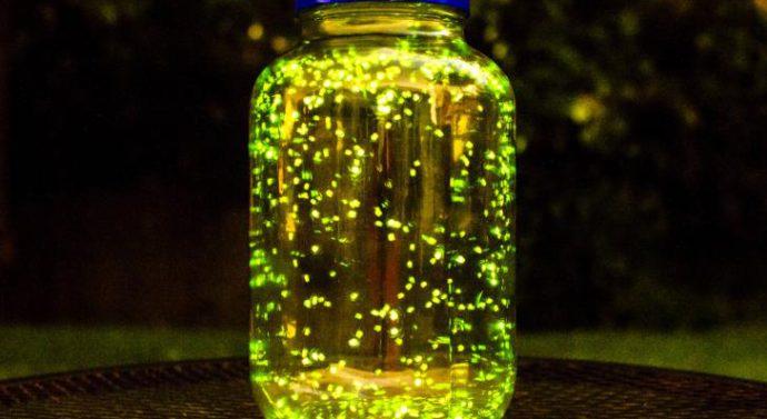 Светлячок — это такой маленький жучок, который светится, как светодиод  + видео