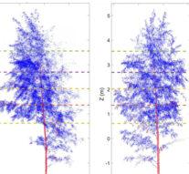 Ученые с помощью лазерного сканирования  выяснили, что деревья спят по ночам