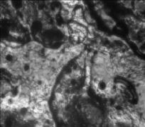 Рис. 2. Микроструктура покрытия, полученного в газовой среде аргона, после лазерного облучения