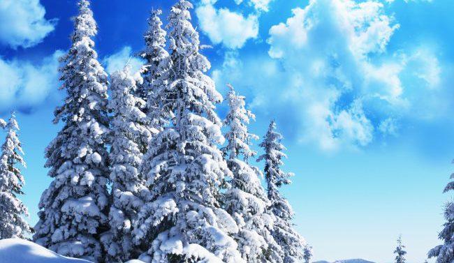 Финские ученые разработали метод на основе лазерного сканирования для распознавания деревьев