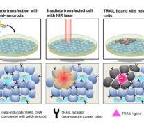 Новый метод убивает раковые клетки при нагревании