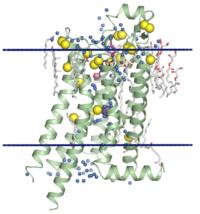 Быстрее определять структуру белка поможет рентгеновский лазер