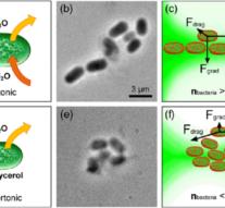 Физики заставили бактерии фокусировать свет