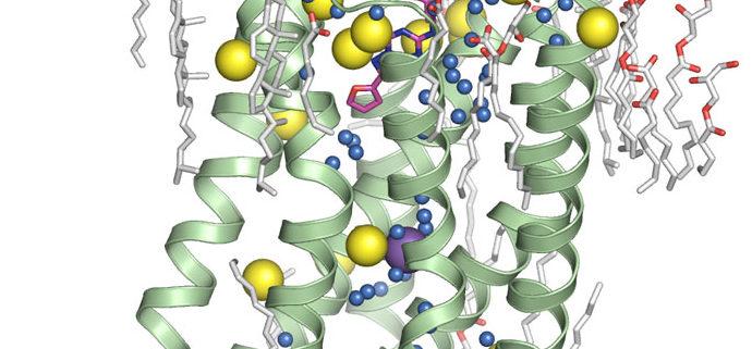Ученые научились определять структуру белковых молекул при помощи рентгеновского лазера и атомов серы в составе их молекул