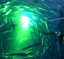 В Норвегии с паразитами рыб борются при помощи подводных роботов с лазерами + видео