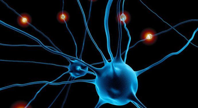 Новый лазерный микроскоп позволит разглядеть работу нейронов