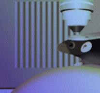 Лазер и микробный белок вживили зрительные образы в мозг мышей