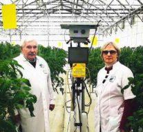 В Мичуринске разработали робота, который лечит лазером тепличные растения