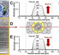 Специалисты впервые применили метод оптической микроскопии на основе лазера для неинвазивного наблюдения